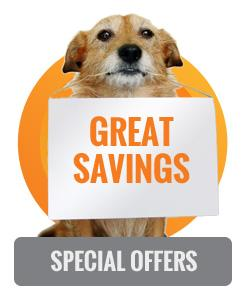 special savings on dog daycare and boarding