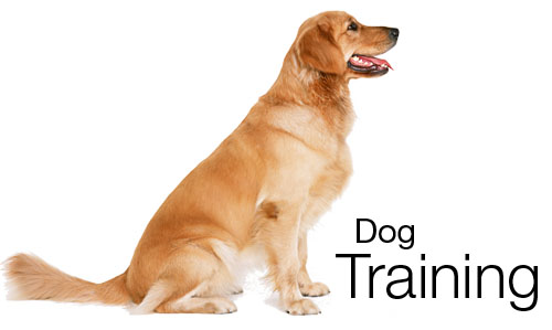 dog obedience training glendale