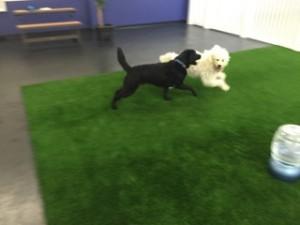 glendale dog daycare