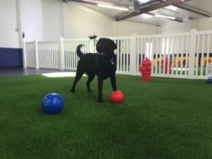glendale dog daycare park
