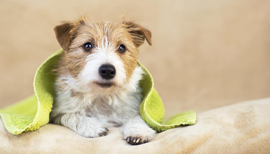 dog grooming glendale
